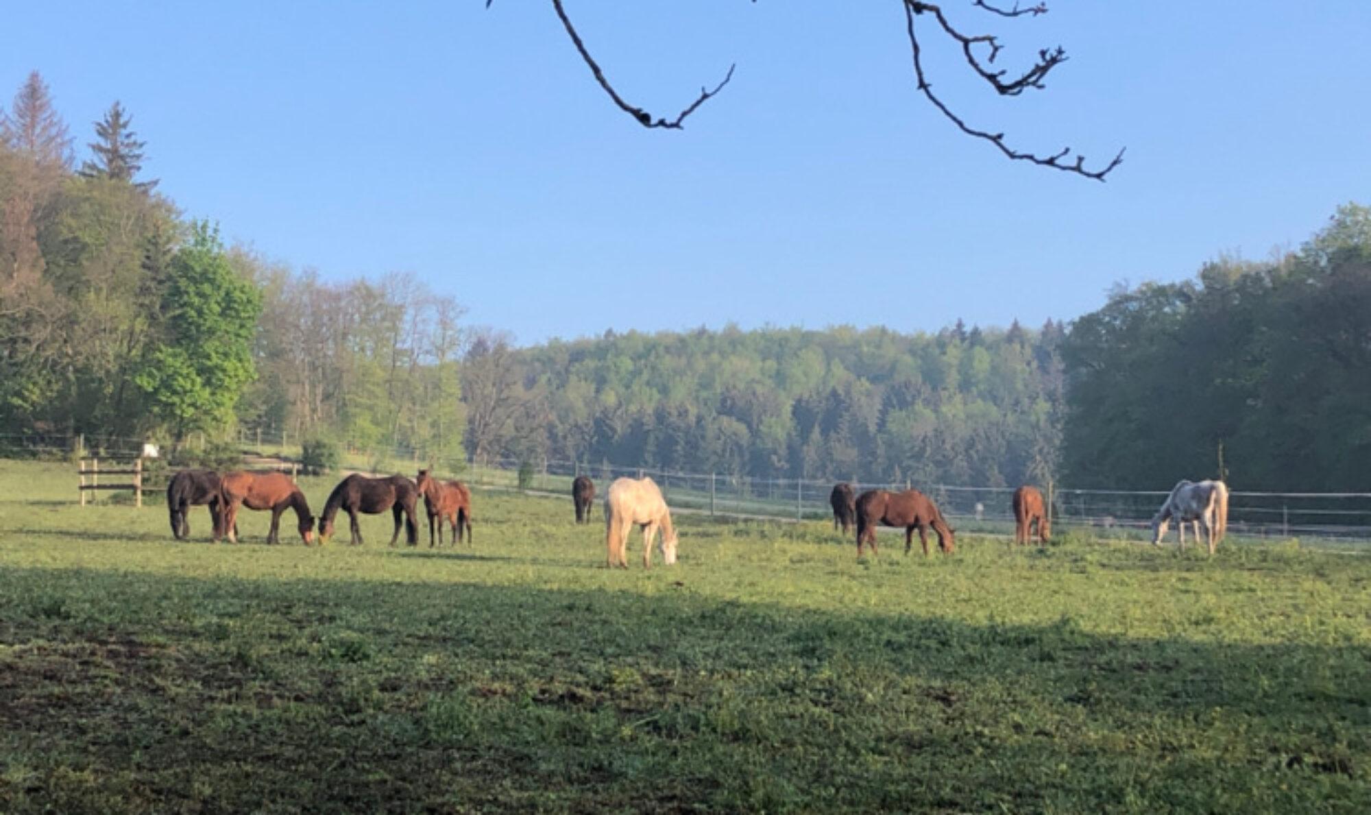 Pferderesidenz Hägliloo